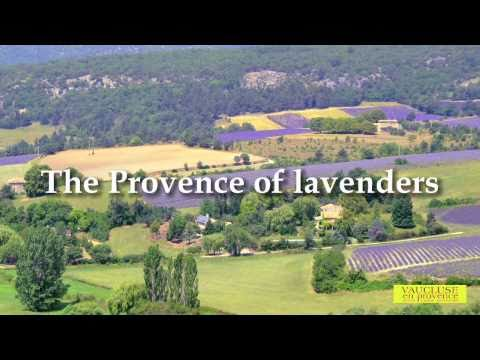 The Provence of lavenders
