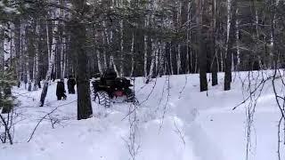 Сокол в лесу