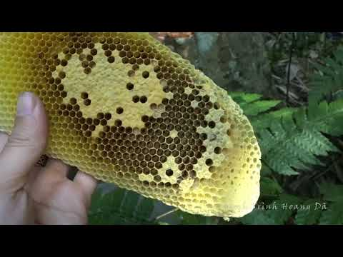 Go hunting forest honey bee season
