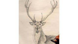 How to Draw a Deer Step by Step | Deer Sketch | Deer Drawing With Pencil | Animal Drawing
