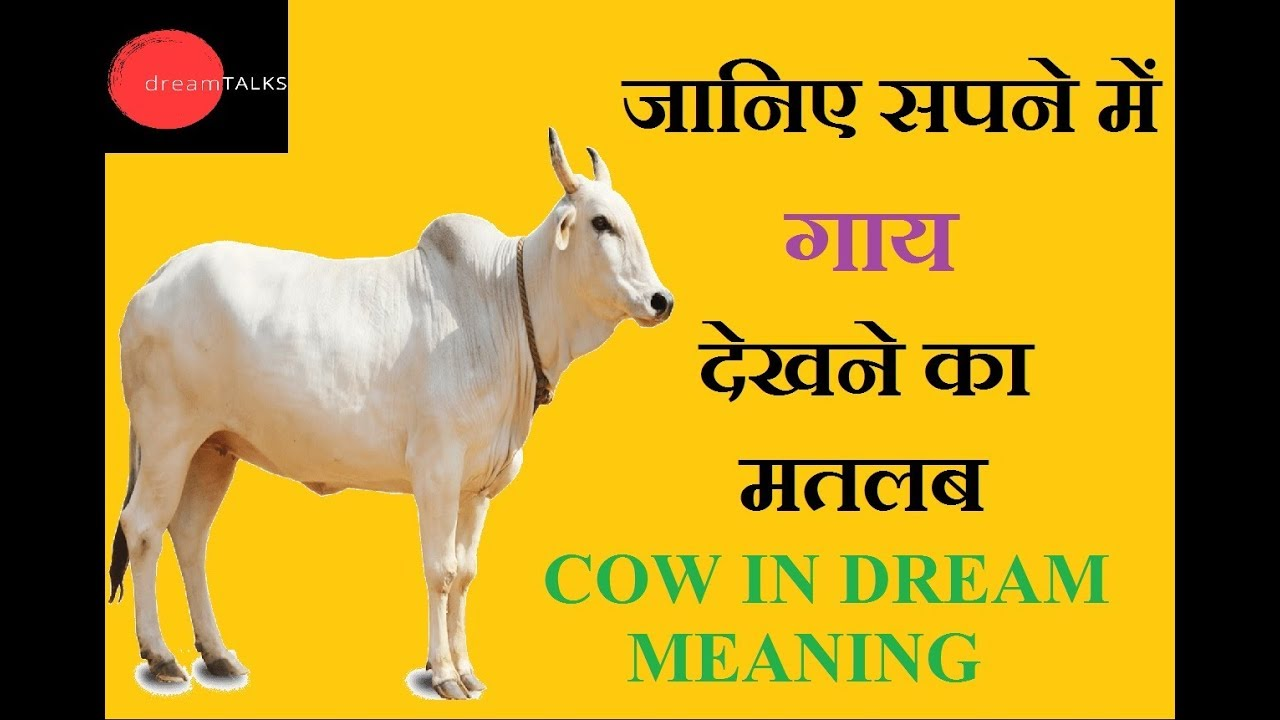 Cow In Dream Meaning In Hindi By Swati Yadav Youtube
