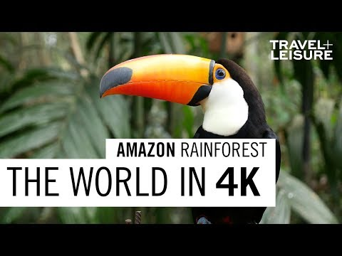 Amazon Rainforest | The World in 4K | Travel + Leisure