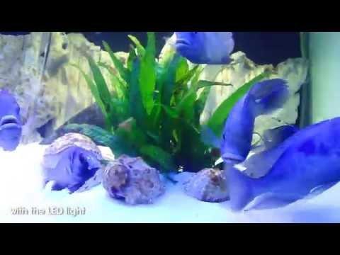 Blue Dolphin Tank