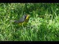 Spring Birding On Governors Island  Mp3 - Mp4 Download