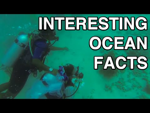 Interesting Facts You Didn't Know About The Ocean