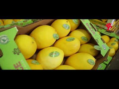 TARGPIAST – Owoce I Warzywa Najwyższej Jakości