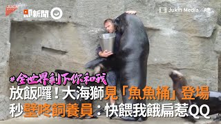 大海獅見「魚魚桶」登場 秒壁咚飼養員:快餵我餓扁惹|寵物|海豹|貓