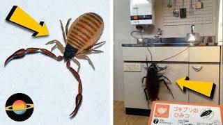 10 szokujących kreatur, które kryją się w twoim domu