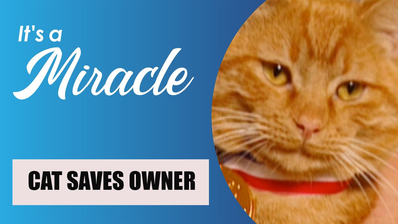 Download Episode 15, Season 1, It's a Miracle - Scuba Encounter; Cat Finds Gas Leak; Boy Scout Rescue