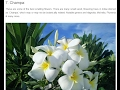 Top 10 Most Fragrant Flowers in India