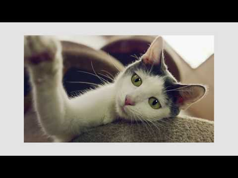 Best Friends Pet Adoption And Spay-Neuter Center Mission Hills Los Angeles