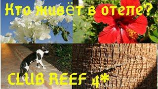 Рептилии цветы и птицы отеля CLUB REEF 4 Кто живёт в отеле Красота отеля Наслаждайтесь релаксом