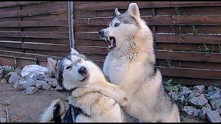 Собаки разозлились на ПРАНК Купил приколы в формикарий. Муравьи жнецы.