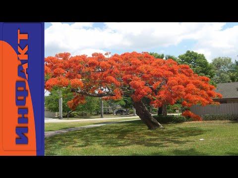 Удивительные и невероятные деревья