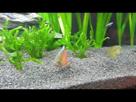 Aquarium Juwel Rio 240 Vom Aufbau bis zum Besatz.