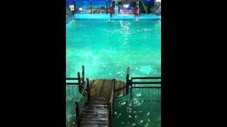 Ярославский дельфинарий(Отрывок из шоу-программы