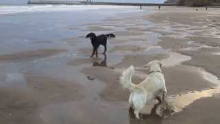 Lily The Digger Dog In Whitby