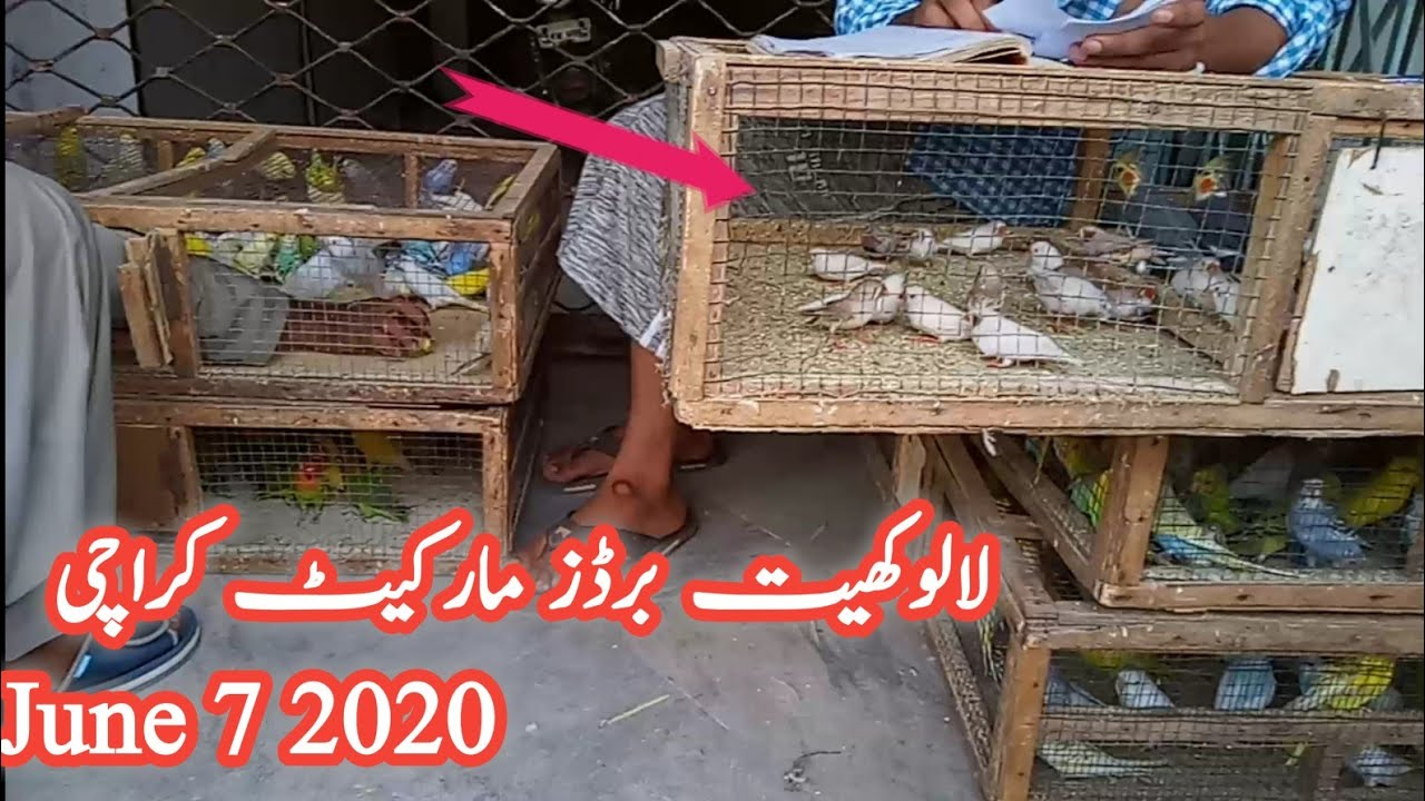 Lalukhait Sunday birds market - 2020 /June /7 latest update in urdu/hindi