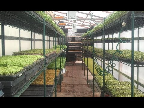 Microgreen Economics - Building and Maintaining a Profitable Business