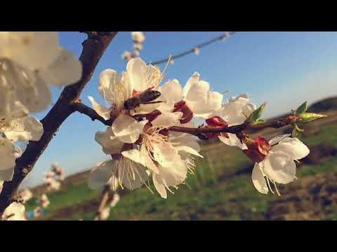Весна 2018 (Тихорецкий район, станица Отрадная)