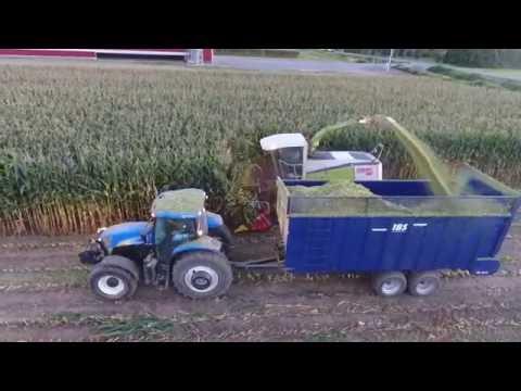 Chopping Corn Silage Harvest 09.14 2016 || Breeweg Custom || BC Canada