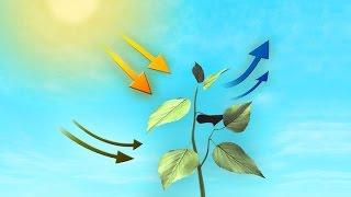 (2) Planter optager ilt og afgiver CO2 !!