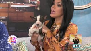 Dejando huella, con Gustavo Reyes   Bull terrier miniatura