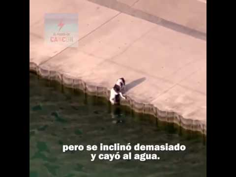 Save the dog from the water by the friendly policeman 😍🐕