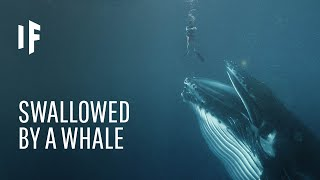 What If You Węre Swallowed by a Whale?