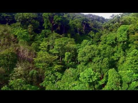 Flying in the rainforest South East Asia