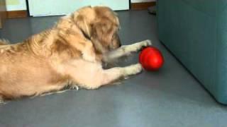 Enseña a tu Perro a estar solo en Casa entretenido y sin hacer Travesuras