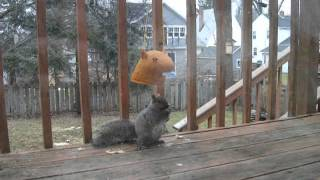 Big Squirrel Head Feeder