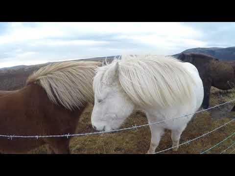 Iceland - Highlights