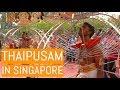 THAIPUSAM IN SINGAPORE   2019   Hindu Tamil Festival   Kavedi Procession