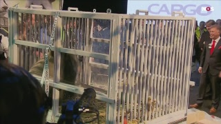 LIVE: Panda's Wu Wen en Xin Ya komen aan in Nederland