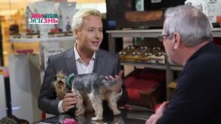 """VITAS  """"The Secret Life of Pets"""" Interview / English subtitles / 1TV  March 02 2019"""