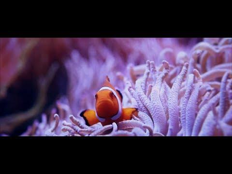 "ArtExpress 2017    HSC Visual Arts Major Work Short Film   ""Remote Emotions"""
