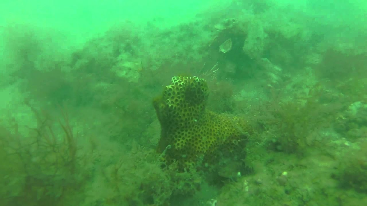 Scuba Diving Venice Beach Florida With Low Visibility