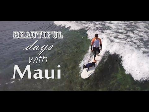 Beautiful days with Maui (Tenerife surf dog)