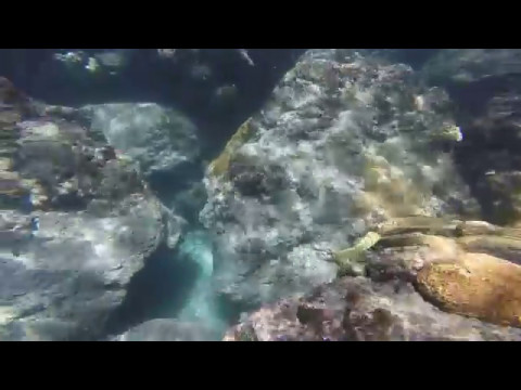 Snorkeling South Inlet Beach Boca Raton FL (Part 1)