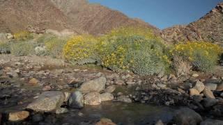 Stream in Anza Borrego Desert State Park