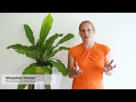 Plant-e Crowdfund