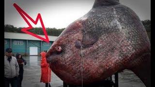 Temukan Ikan Sebesar Gajah, Lihat Ekspresi Nelayan Ini