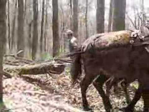 Mule Powered Logging