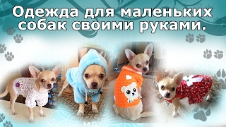 Одежда для маленьких собак своими руками.