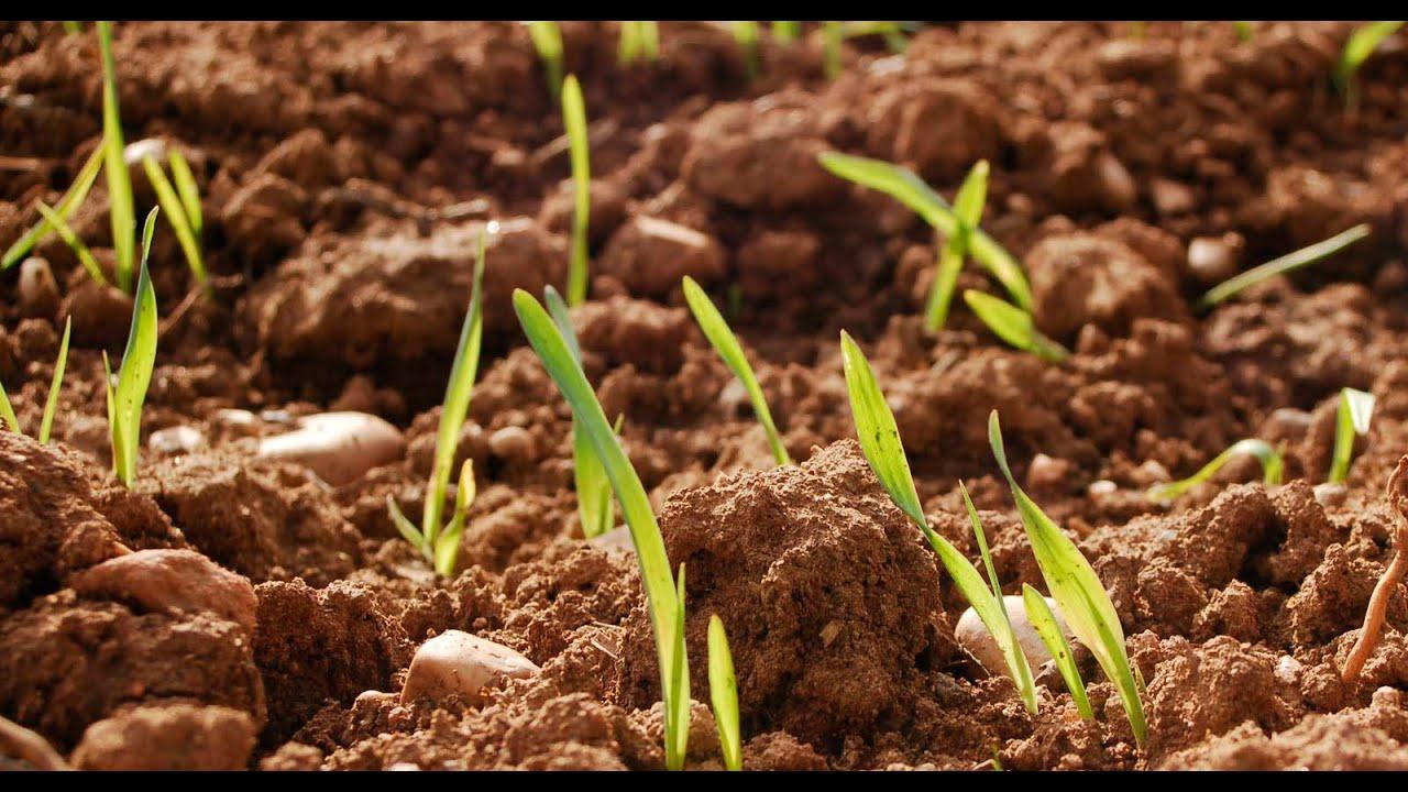 que significa nutrientes del suelo