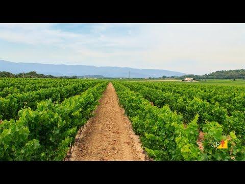 Clique e veja o vídeo Curso a Distância Produção de Mudas Frutíferas