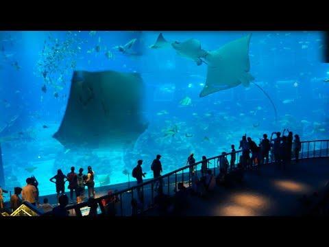 Biggest Aquarium Fish Tank in Singapore SEA Aquarium Marina Life Park,Sentosa Island