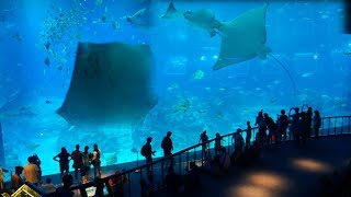 Biggest Aquarium Fish Tank in Singapore SEA Aquarium Marina Life Park,Sentosa Island