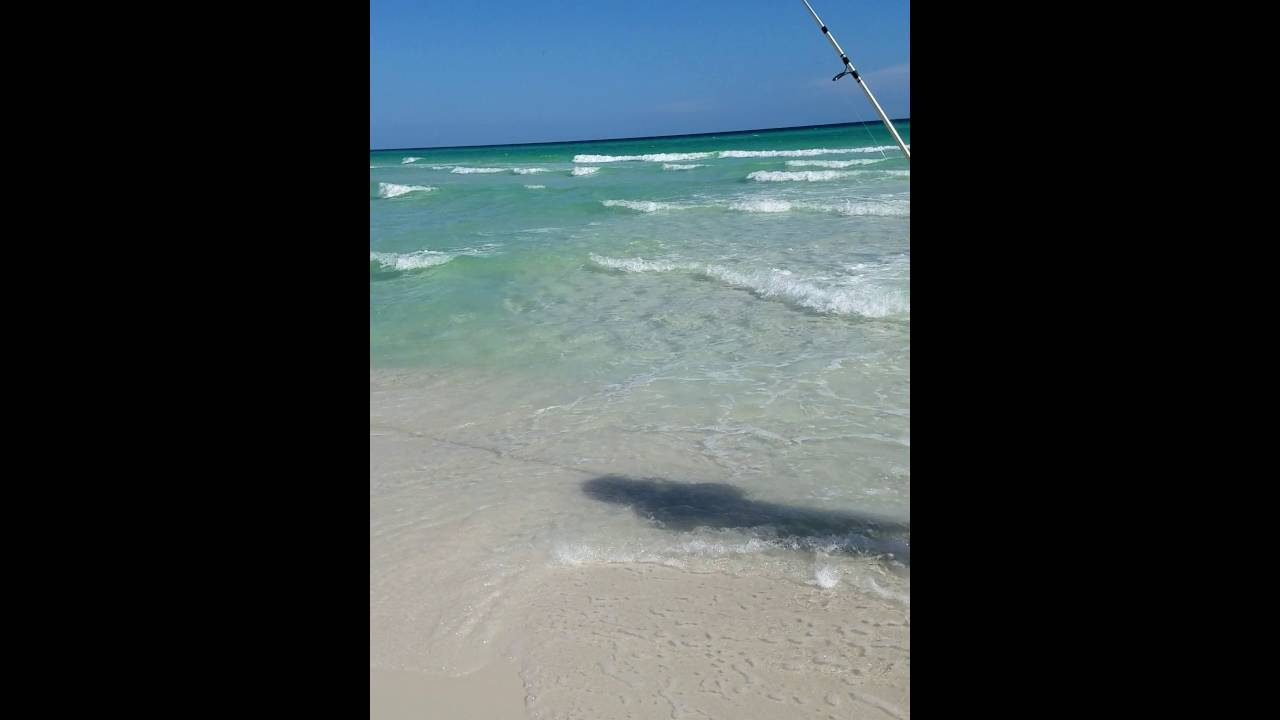Surf Fishing In Grayton Beach Pretty Redfish